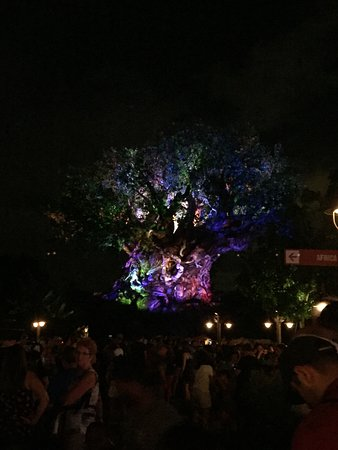 tree of life awakenings show really cool オーランド ディズニー