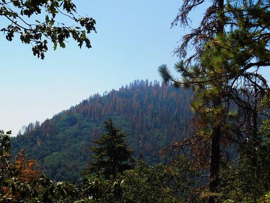 Three Rivers, Californien: Amazing views on the way