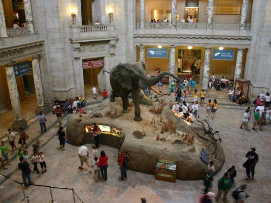 Museum Of Natural History Islam
