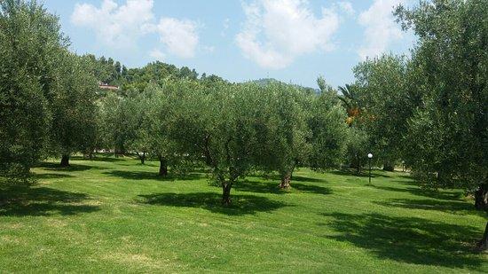 Kalandra, Griekenland: 20160728_125228_large.jpg