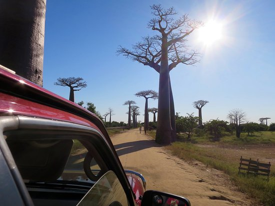 Avenue of the Baobabs: 車内から