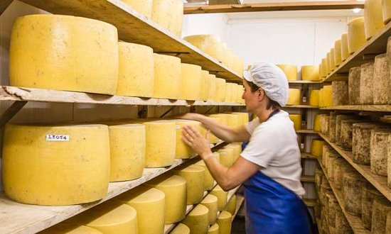 Файф, UK: During our private tour (pre arranged but Christopher) of the cheese place