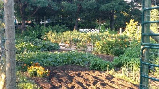Assisi Heights: Vegetable garden