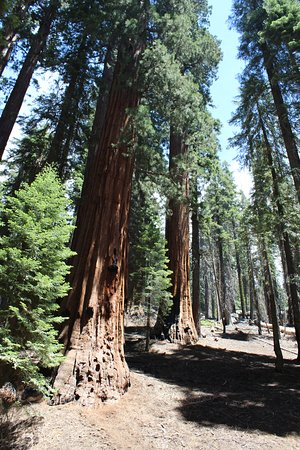Three Rivers, CA: Giant Forest