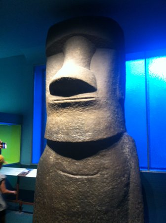 Gum Gum - Picture of American Museum of Natural History, New York ...