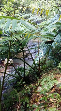 Afareaitu, Frans-Polynesië: río que lleva a la cascada