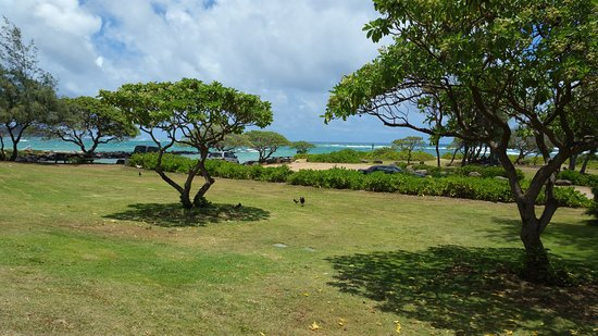 Kauai Path: Greenery and beach along the way