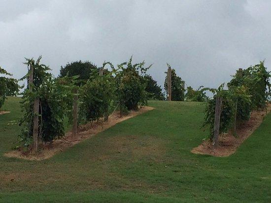 Chateau Elan Winery And Resort Bild