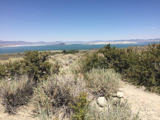 Mono Basin Scenic Area Visitor Center: photo0.jpg