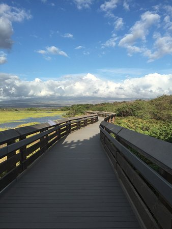 Ocean Breeze Hideaway: wonderful bird watching walking trail; short drive from OBH