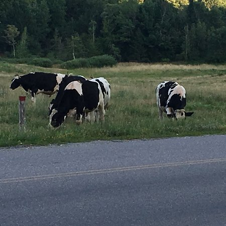 These guys know when it's dinner time at Bistro at Ten Acres!