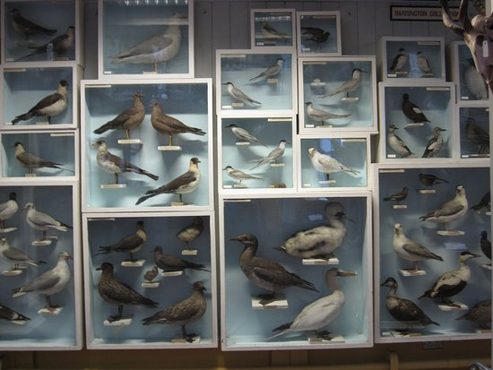 National Museum of Ireland - Natural History : A display on the 2nd floor