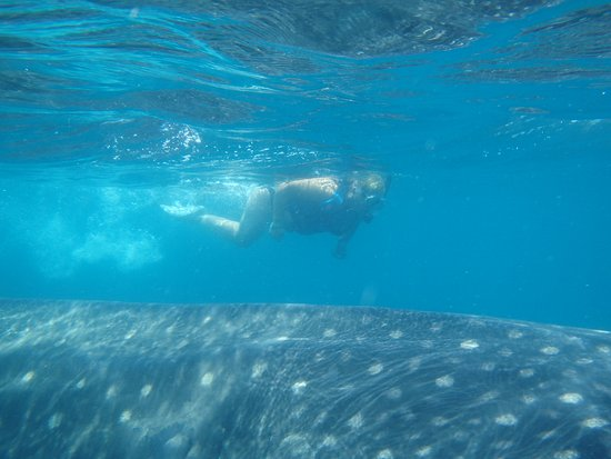 Mexico Travel Advisors Day Tours : SWIMMING WITH THE SHARK