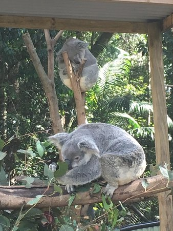 Woombye, Австралия: photo0.jpg