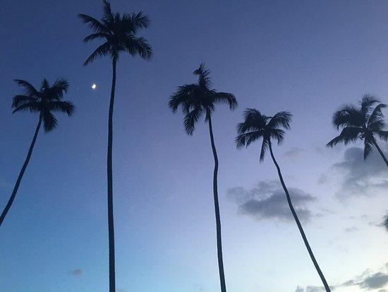 Rincon of the Seas Grand Caribbean Hotel : photo0.jpg