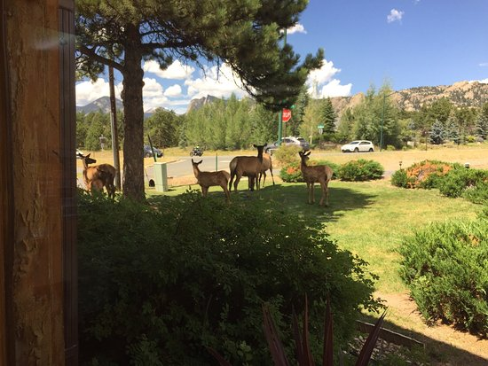Americas Best Value Inn at Estes Park: photo1.jpg