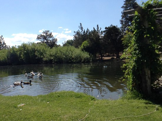 Terrebonne, OR : Pond with some of our ducks