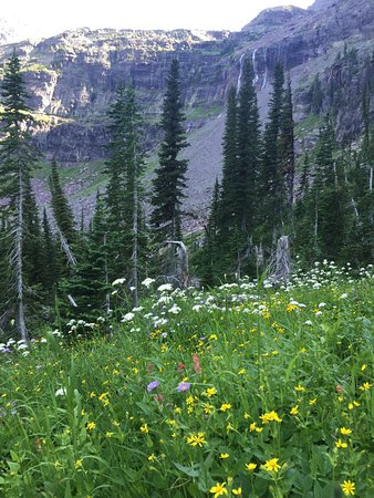 Sperry Chalet: flowers on the way to top of Sperry Glacier!