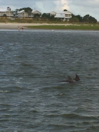 Captain Mike's Dolphin Tours: photo0.jpg