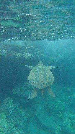 Kai Kanani Sailing Charters: Snorkelen bij Molokini en schildpadden kijken (deluxe tour van 9.00 tot 13.00 uur)