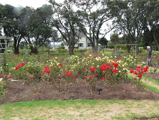 Parnell Rose Gardens: Roses in bloom