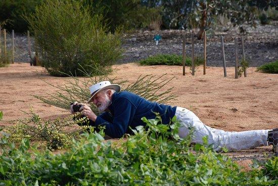 Melton, Australia: Enjoy photography in the garden