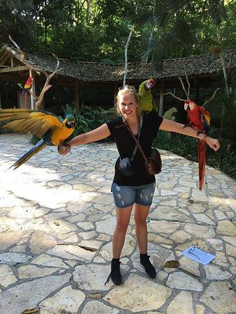 Macaw Mountain Bird Park & Nature Reserve : photo0.jpg