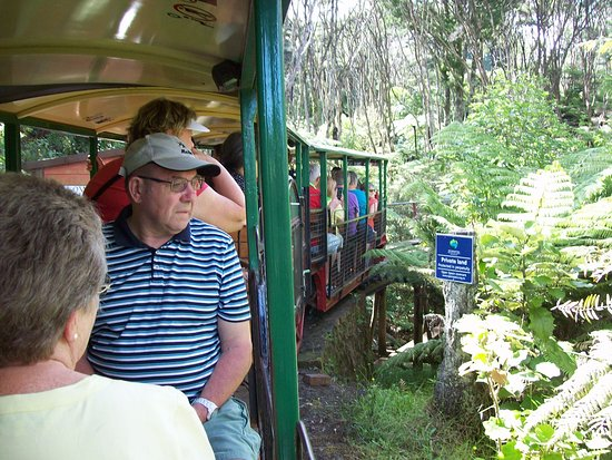 Driving Creek Railway and Potteries: Driving Creek Railway