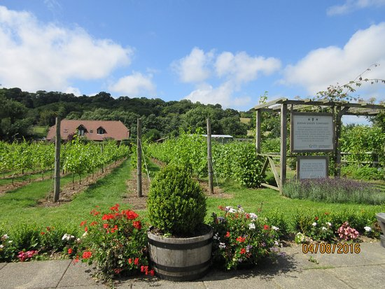Barham, UK : View from the outside area of the tea room