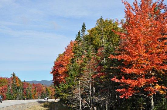 White Mountain National Forest: 沿路楓紅 讓我們驚喜不已