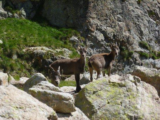 Alpes Maritimes, Frankreich: Faune locale