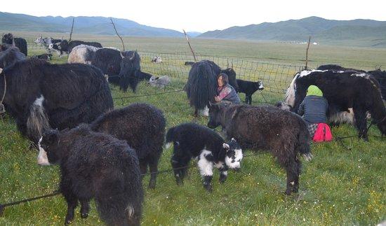 Qinghai Plateau Foto