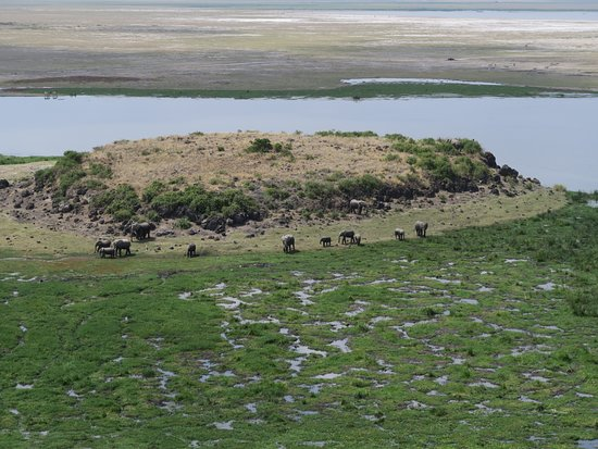 Amboseli National Park, كينيا: View from the top of the Eli's below!