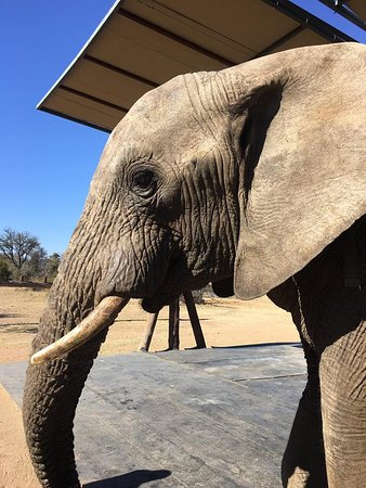 Adventures with Elephants: Up close and personal :)