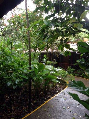 Pachira Lodge: photo3.jpg