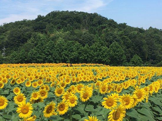 世羅高原農場, photo0.jpg