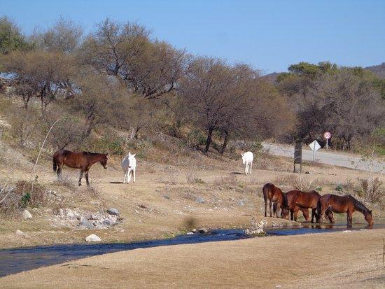 San Luis, Argentina: Arroyo Cabeza de Novillo