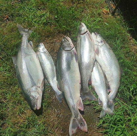 Good Times Sportfishing of Lake Ontario, LLC