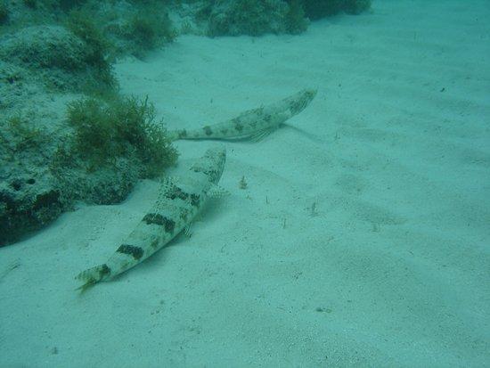 Palm Beach : Peixes de Aruba