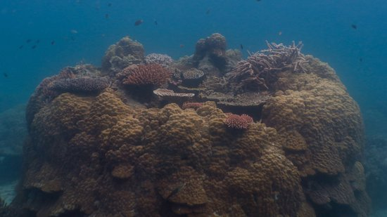 Tioman Dive Centre: a lovely mesa-like coral outcrop near the house reef