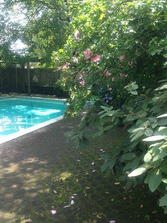 Wayne, Pensilvania: Our beautiful pool