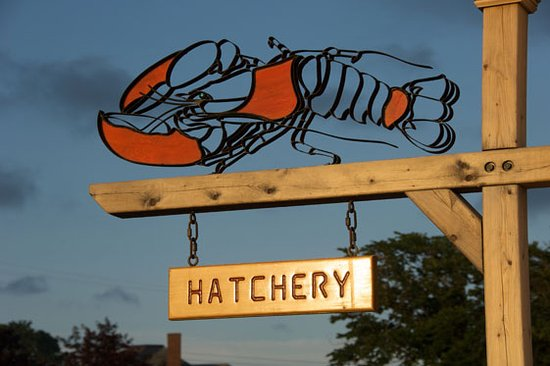 Pictou, Canada: Lobster Hatchery