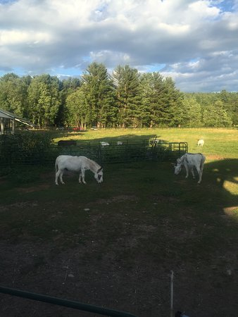 Sunapee, NH : Great place for the kids to play and feed the animals unfortunately we were too thrilled with th