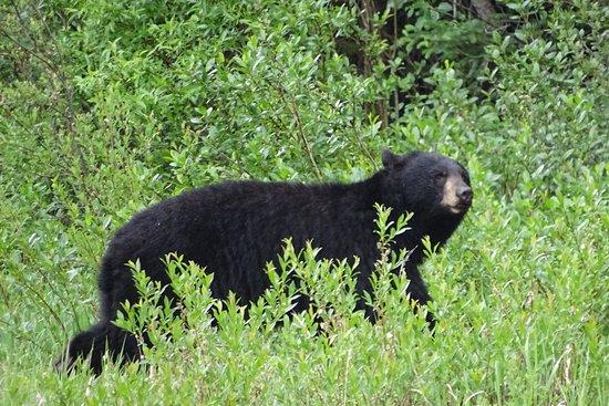 The Crossing Resort: zwarte beer gezien vanaf de HW16