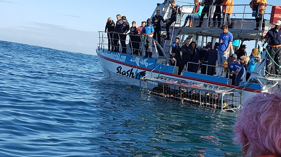 Kleinbaai, جنوب أفريقيا: Preview while on whale watching trip
