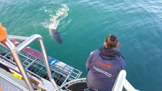 Kleinbaai, جنوب أفريقيا: His name was Nemo!