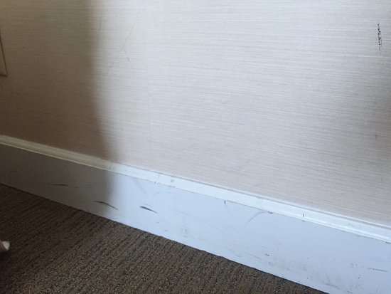 Holiday Inn San Diego-Bayside: Scratches on baseboards (easy fixes, ignored)