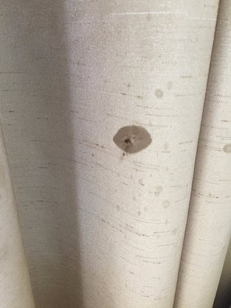Holiday Inn San Diego-Bayside: Horrible looking stain on the curtain