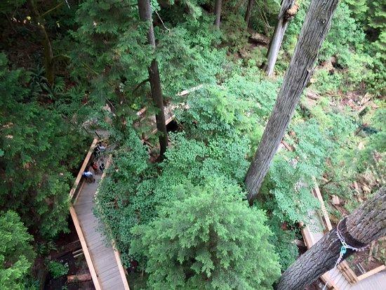 North Vancouver, Canada: Treetop walkway
