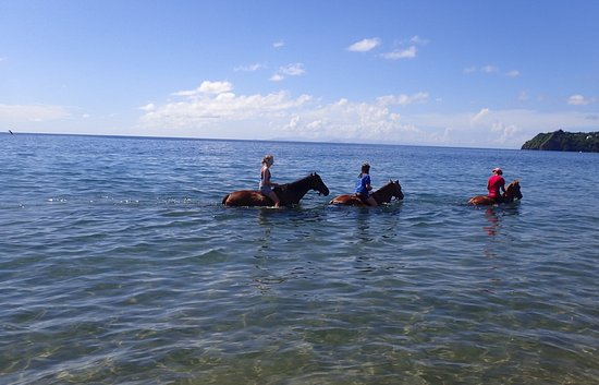 Rainforest Riding: Riding horseback in the water with Guadalupe Island in the distance
